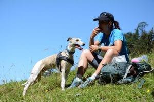 De favoriete tocht van... hond Cedric en gids Gabi