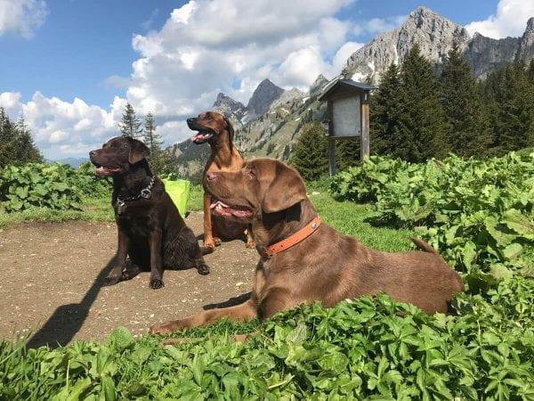 Tannheimer Bergen met de hond